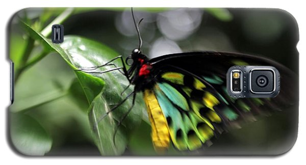 Galaxy S5 Case featuring the photograph Mr. Cairns Birdwing by Mary Lou Chmura