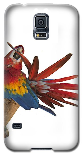 Mr. Clean The Scarlet Macaw Galaxy S5 Case by Daniel Hebard
