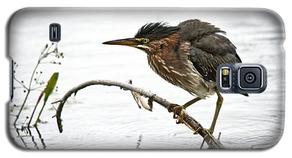Mr. Green Heron Galaxy S5 Case