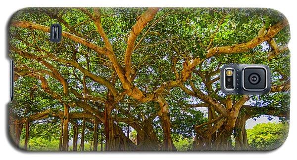 Mr. Mac's Tree Galaxy S5 Case