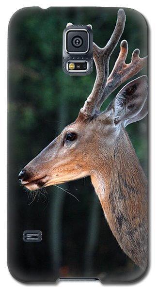 Galaxy S5 Case featuring the photograph Mr. Majestic by Rita Kay Adams