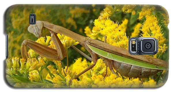 Galaxy S5 Case featuring the photograph Mr. Mantis by Sara  Raber