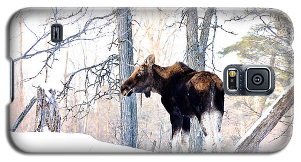 Mr. Moose Galaxy S5 Case