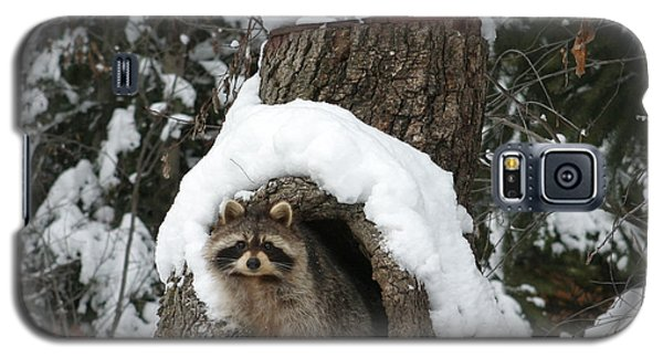 Mr. Raccoon Galaxy S5 Case