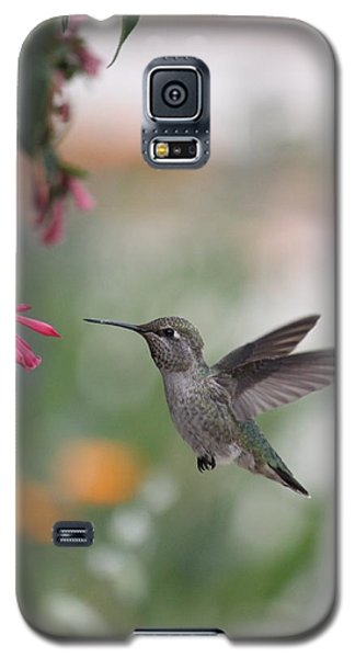 Galaxy S5 Case featuring the photograph Mrs. Little Anna's Hummingbird by Amy Gallagher