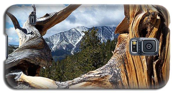 Mt. Charleston Thru A Tree Galaxy S5 Case by Alan Socolik