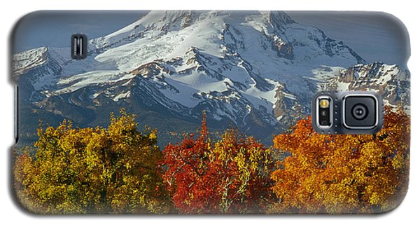 1m5117-mt. Hood In Autumn Galaxy S5 Case