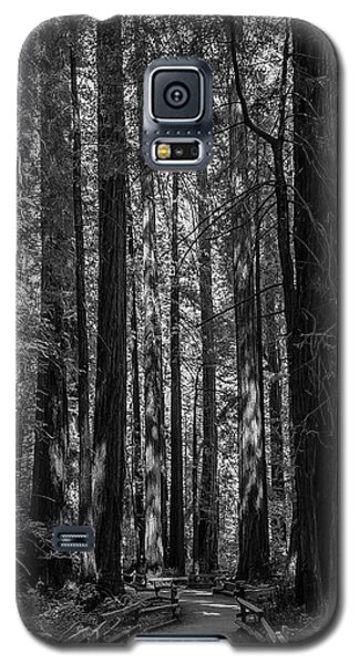 Muir Woods Giants Galaxy S5 Case