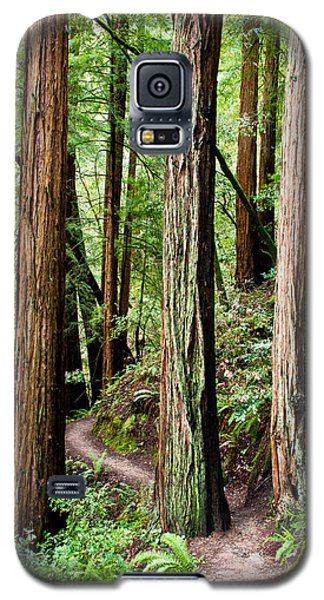 Muir Woods Galaxy S5 Case