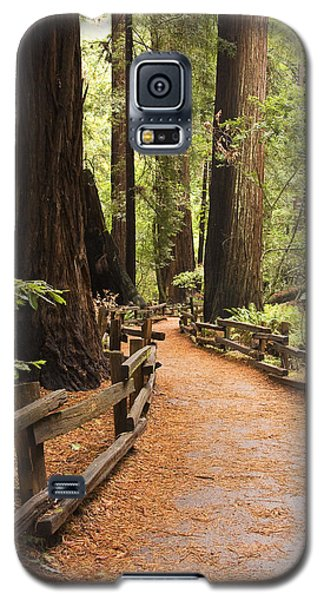 Muir Woods Trail Galaxy S5 Case