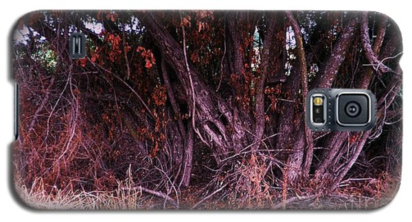 Galaxy S5 Case featuring the photograph Mulberry In Fall by Suzanne McKay