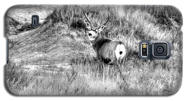 Mule Buck B/w Galaxy S5 Case by Kevin Bone
