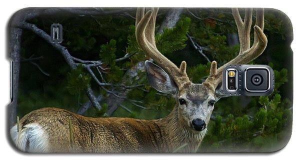 Mule Deer 4x4 In Velvet-signed  #4213 Galaxy S5 Case