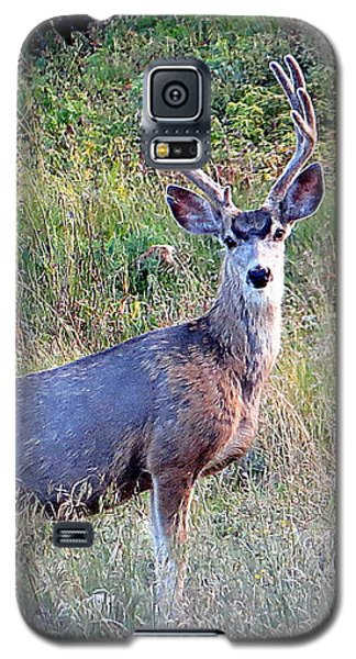 Mule Deer Buck Galaxy S5 Case by Karen Shackles