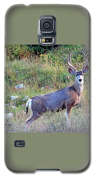 Galaxy S5 Case featuring the photograph Mule Deer Buck by Karen Shackles