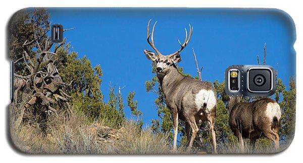 Mule Deer Buck Galaxy S5 Case