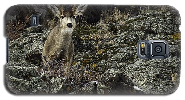 Galaxy S5 Case featuring the photograph Mule Deer Buck by Susi Stroud