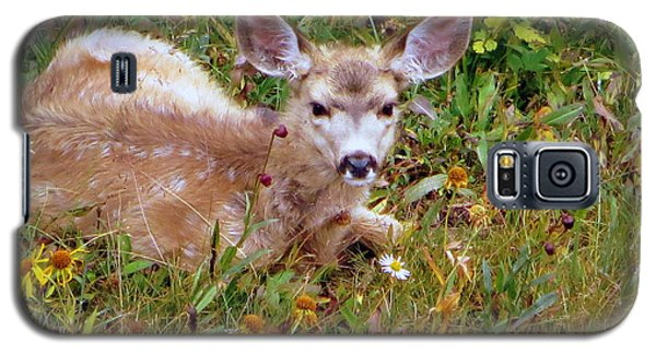 Galaxy S5 Case featuring the photograph Mule Deer Fawn by Karen Shackles