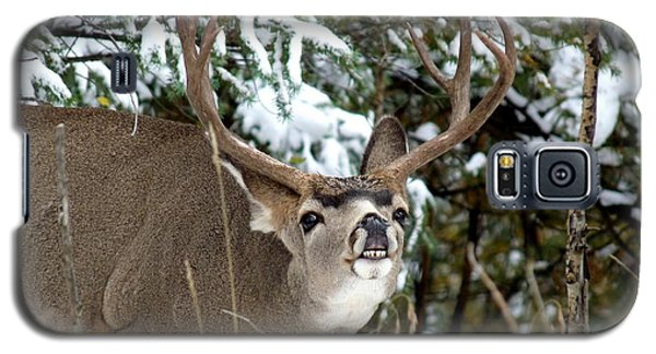 Mule Deer - Flehmen Response Galaxy S5 Case by Marilyn Burton