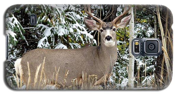 Mule Deer In The Snow Galaxy S5 Case by Marilyn Burton