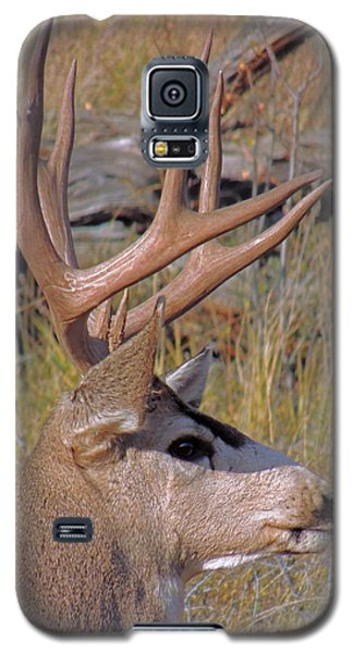 Galaxy S5 Case featuring the photograph Mule Deer by Lynn Sprowl