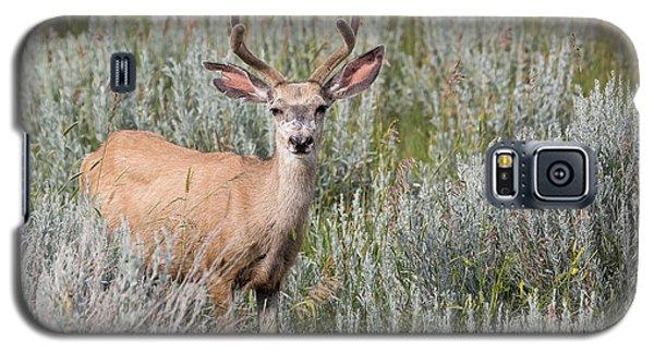Mule Deer Galaxy S5 Case