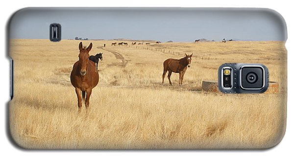 Mules In Gold Grass Galaxy S5 Case