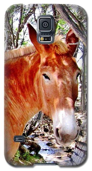 Muley Galaxy S5 Case by Marilyn Diaz