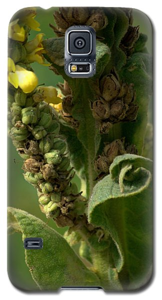 Galaxy S5 Case featuring the photograph Mullen by Michael Dohnalek
