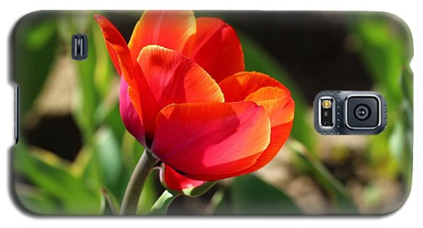 Galaxy S5 Case featuring the photograph Multicolored Tulip by Lynn Hopwood