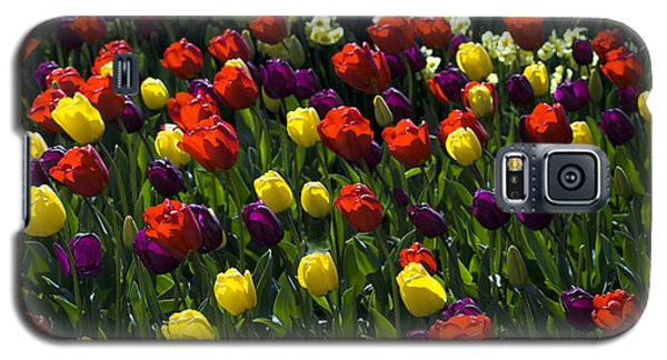 Multicolored Tulips At Tulip Festival. Galaxy S5 Case