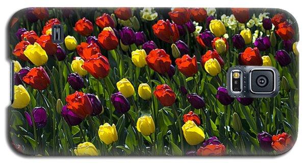 Colorful Tulip Field Galaxy S5 Case