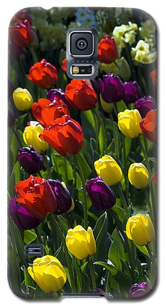 Colorful Tulip Field Galaxy S5 Case