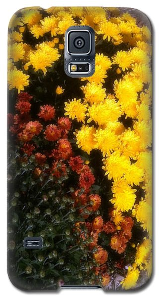 Galaxy S5 Case featuring the photograph Mums In The Fall by Deborah Fay