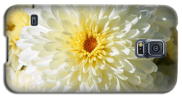 Galaxy S5 Case featuring the photograph Mums The Word by Courtney Webster