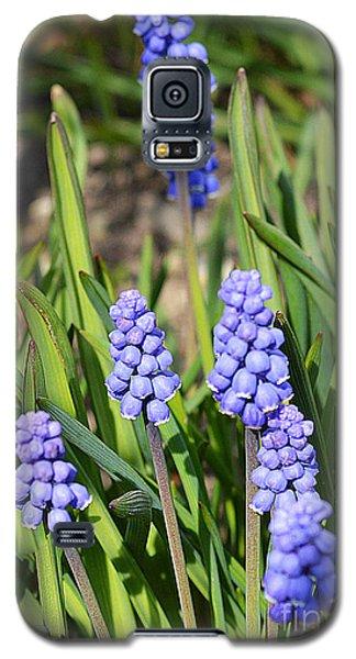 Muscari Armeniacum Galaxy S5 Case