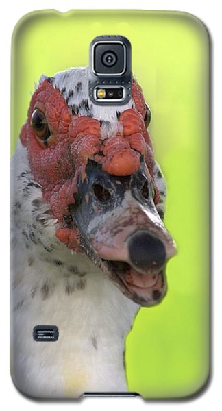Muscovy Duck Galaxy S5 Case