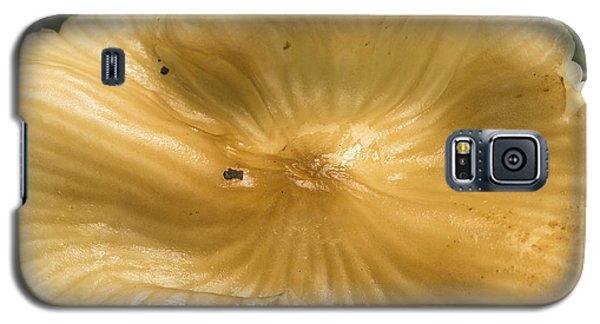 Galaxy S5 Case featuring the photograph Mushroom Extravaganza by Wanda Brandon