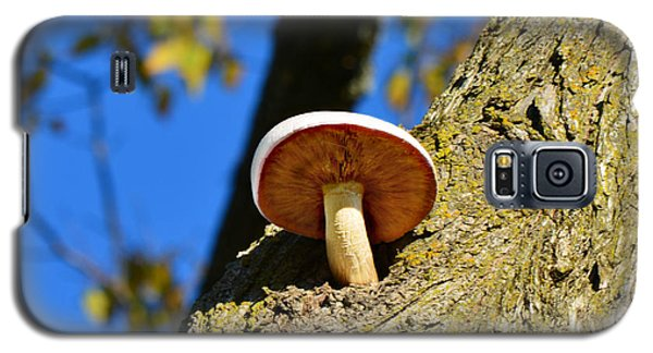 Galaxy S5 Case featuring the photograph Mushroom In A Tree by Ally  White