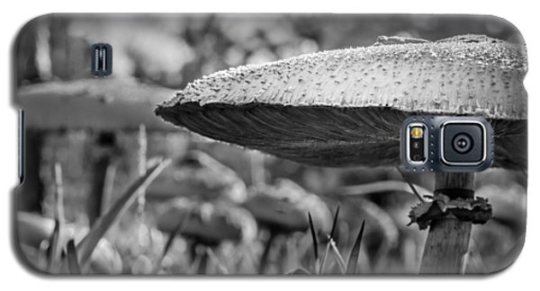 Mushrooms In The Morning Glow Galaxy S5 Case