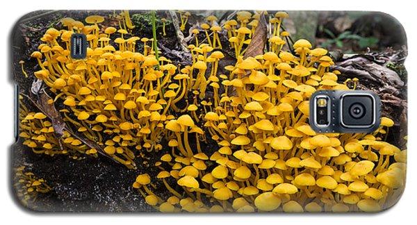 Mushrooms On Tree Trunk Panguana Nature Galaxy S5 Case by Konrad Wothe