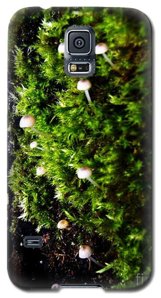 Mushrooms Galaxy S5 Case by Vanessa Palomino