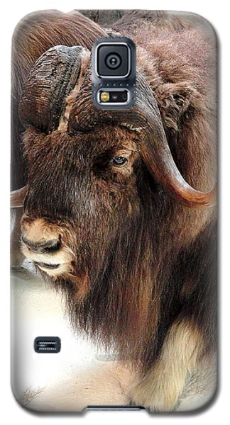 Galaxy S5 Case featuring the photograph Muskox by Mary Beth Landis
