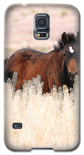 Galaxy S5 Case featuring the photograph Mustang Colt In The Grasses by Vinnie Oakes