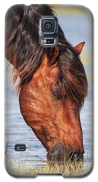 Mustang Feeding In The Marsh Galaxy S5 Case