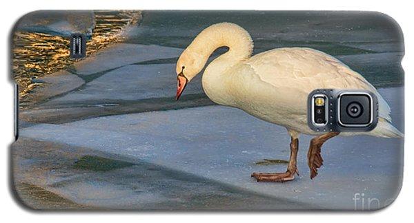Mute Swan On Ice  Galaxy S5 Case by Gerda Grice