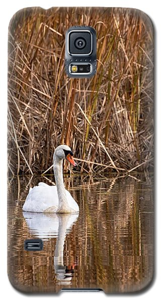 Mute Swan Reflection Galaxy S5 Case