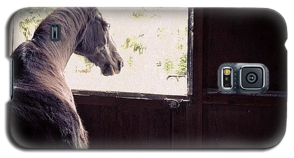 Animal Galaxy S5 Case - My Boy Reyo. He Will Be 25 This Year by Blenda Studio