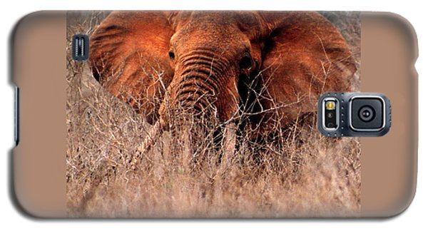 My Elephant In Africa Galaxy S5 Case by Phyllis Kaltenbach