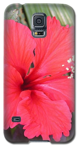 My Favorite Red Garden Friend Galaxy S5 Case
